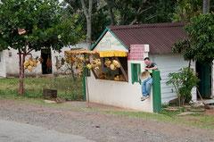 Fruchtverkauf,  Viñales, Cuba