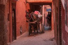 Eselskarre in der Medina