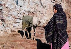 India, Jodhpur, Indien, Rajasthan, Frau mit Ziege