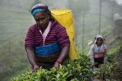 Teepflückerin,  Haputale, Sri Lanka