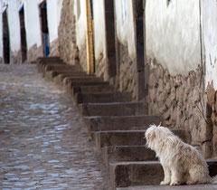 Hund in Cusco, Peru, Südamerika