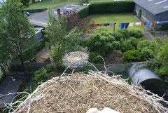 Blick von Nest 6 zum Nachbarn auf dem Gehege Nest 13