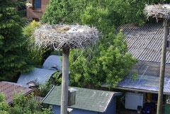 Blick von Nest zum Nachbarn Nest 16