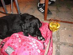 Asterix(Buddy) bewacht meinen Rucksack auf dem Weinfest