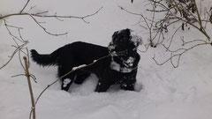 Ayla im Schnee