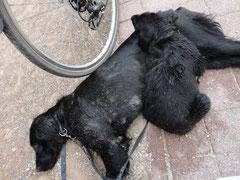 Radfahren macht sooo müde