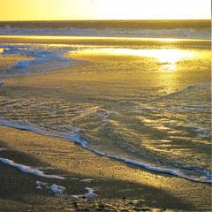 Naturnah unterwegs am Meer | SP- Digitalfotografie | 2020