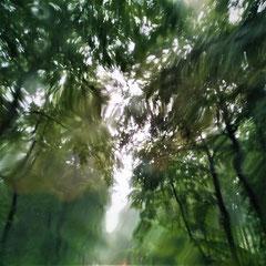 Naturnah unterwegs im Wald | SP- Digitalfotografie | 2020