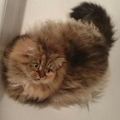 Sheela! Auch Katzen sind bei mir herzlich Willkommen!