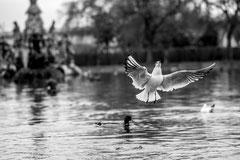 Fliegen by Sebastian Pintea