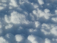 Korallen oder Schnee?