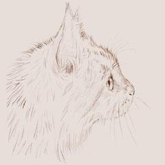 デッサン画 イラスト『猫』