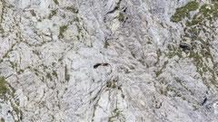 "Gänsegeier im Flug entlang der Felswand unterhalb des ""Rotechaste"""