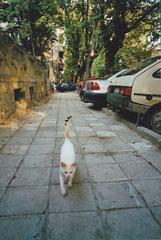 Varna, Bulgaria  ©  Eri Mantani