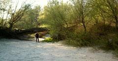 """Petra am Sandstrand der sog. """"Donauinseln"""". Feiner Sand und Muscheln - aber meistens fließt hier die Donau."""
