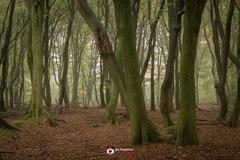 Bosfotografie: 'Dancing Trees' een nevelige ochtend in een mooi bos