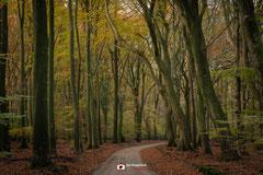Bosfotografie: 'Onbekende toekomst' in een mooi herfstbos