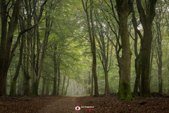 Bosfotografie: 'Mystrys' een nevelige ochtend in een mooi bos
