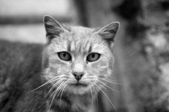 chat potier 5