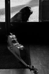 Chien de Cello
