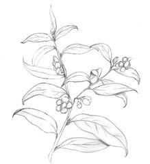Illustration Tee Pflanze für Bio by Emma