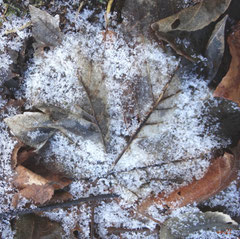 """Blätter im Frostkreis"" Textil Leinwand ... 50x50cm  116,-€"