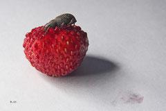 Käfer auf meiner Walderdbeere - Mai 2014
