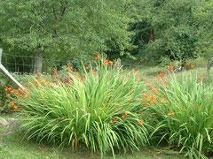 COTE JARDIN : LES PLANTES