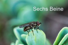 Sechs Beine, Insekten