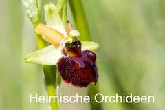Orchideen und andere seltene Pflanzen