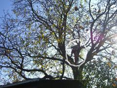 Baum-Spezialist