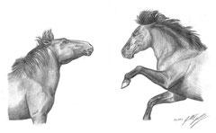 Wild Horses A4 (2009)