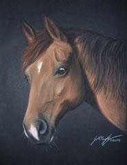 Chestnut Pony - Pastellkreide ca. A4 (2009)