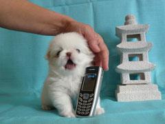 """""""Алло-о-о-о!!! Таки у телефона!"""""""