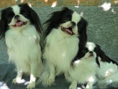 Двое из ларца - одинаковы с лица. Кэдзин(сын Никко), Никко и Кадза-ри(дочь Никко).