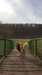 Auf der Brücke zur Hundewiese