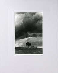 Tree and stacked logs. Bergisches Land, Germany. 2021 (Silvergelatineprint, 40x50 cm)