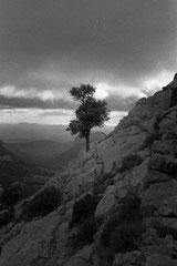 Lonesome tree (Sa Rateta, Mallorca, Spain. 2019)