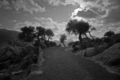 Dirt road and olive trees (Puig Roig, Mallorca, Spain. 2019)