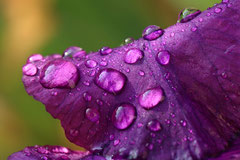 Bernard : Après la pluie 2