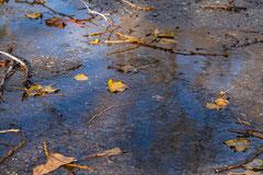 Caroline : Après la pluie 1