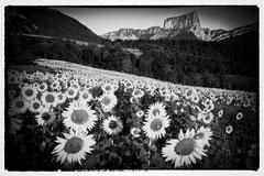 Caroline : Le mont Aiguille (Isère)