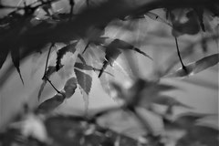 Ian :  Jardin des plantes à St Cyprien 1