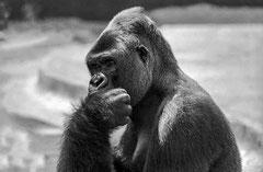 Christian : Le penseur Zoo de Barcelonne 1992