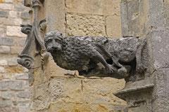 Bernard : Gargouille Narbonne