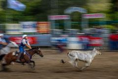 Francis : Rodeo Nouvelle Calédonie 2
