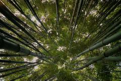 Ian :  Jardin des plantes à St Cyprien 2