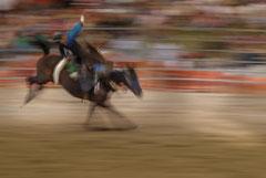 Francis : Rodeo Nouvelle Calédonie 1