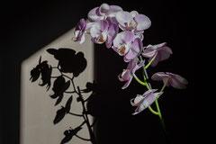 Bernadette : Dans le jardin - Les ombres 1