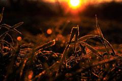 Ian : Aube hivernale et les cerisiers